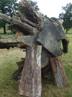 The remaining stump and roots of the 159-year-old dead oak tree felled at the 2008 Oak Fair. The rest of the tree has been used by various crafts people to create a variety of products and tributes to the oak
